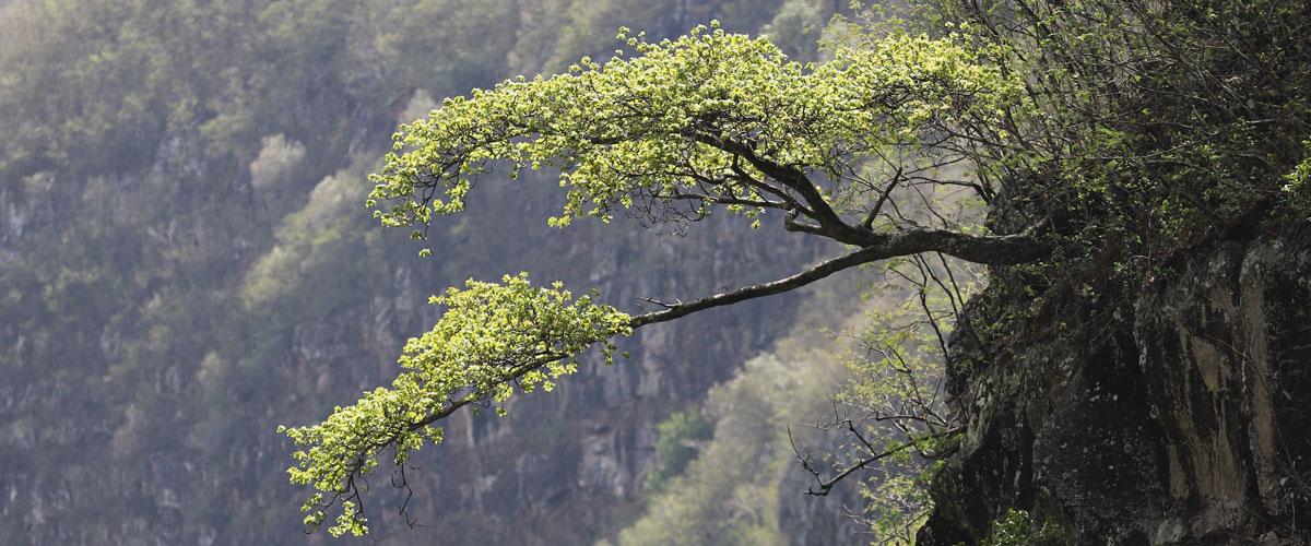 arbre_reunion_974_flore_reunion_etude_ecologie_environnement_inventaire_naturaliste