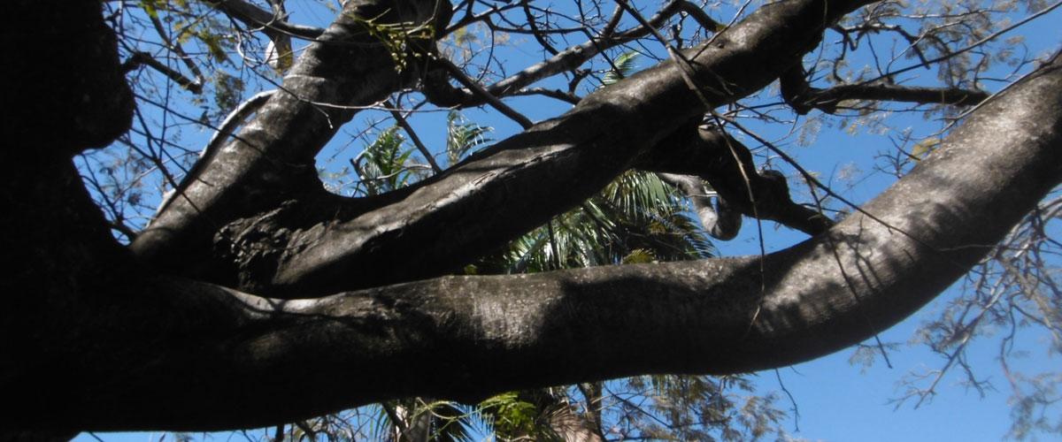 foret_arbre_974_reunion_etude_ecologie_environnement