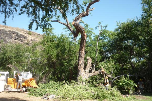 parc_grotte_premiers_habitantsdiagnostic_phytosanitaire_biomecanique_arbre_securite_sante_974_reunion_etude_foret