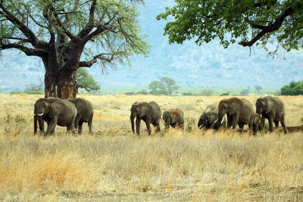 tanzanie_ecologie_schema_planification_developpement_territoire_etude