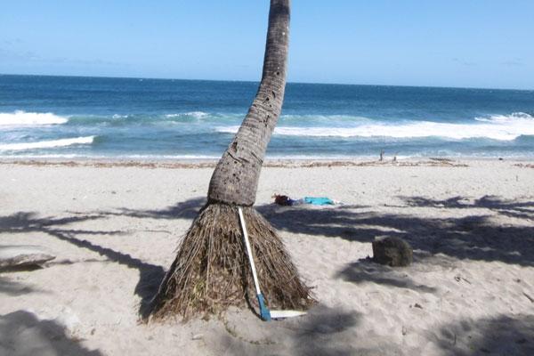 grande_anse_diagnostic_phytosanitaire_biomecanique_arbre_securite_sante_974_reunion_etude_foret