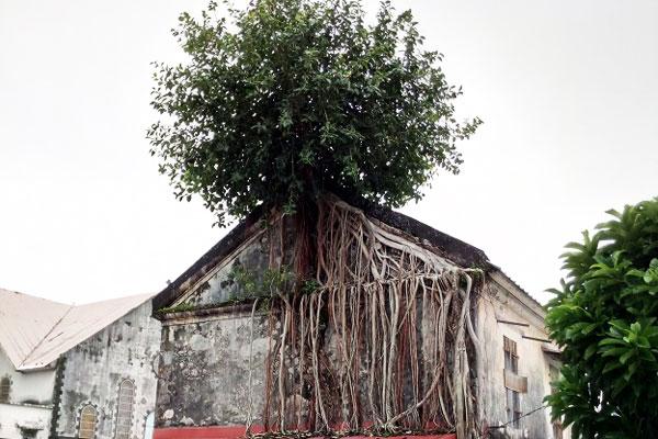 eglise_saint_andre_diagnostic_phytosanitaire_biomecanique_arbre_securite_sante_974_reunion_etude_foret