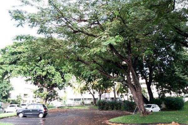 diagnostic_phytosanitaire_biomecanique_arbre_securite_sante_974_reunion_etude_foret